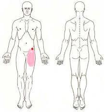 股関節画像3